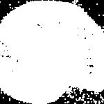 amonite logo Solveig&Ronan