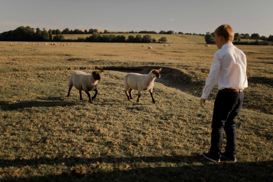 moutons des prés salés photo