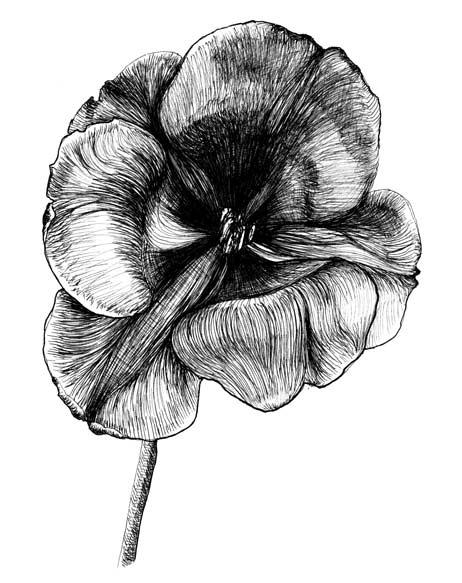 solveig robbe dessin au trait noir et blanc tulipe