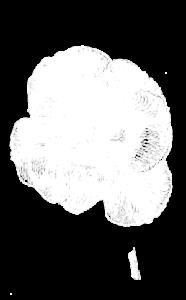 Dessin-Tulipe Solveig Robbe